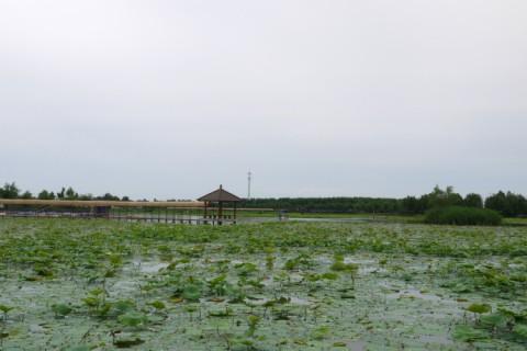 baiyangdian